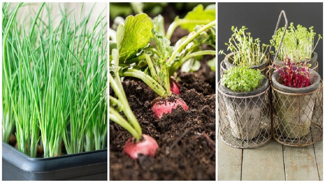 Grow your own veggies at home this winter season